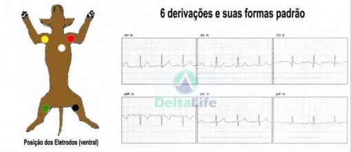 Eletrocardiógrafo DL 600 Veterinário