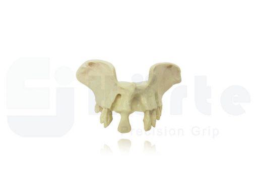 Maxila Pequena Com Alguns Dentes - 4030