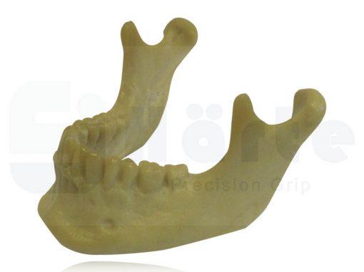 Mandíbula Com Todos os Dentes Extra Dura - 4013D