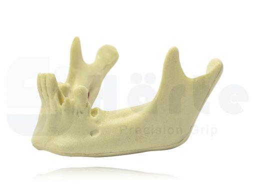 Mandíbula Com Alguns Dentes - 4012