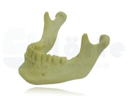 Mandíbula Com Todos Os Dentes - 4013