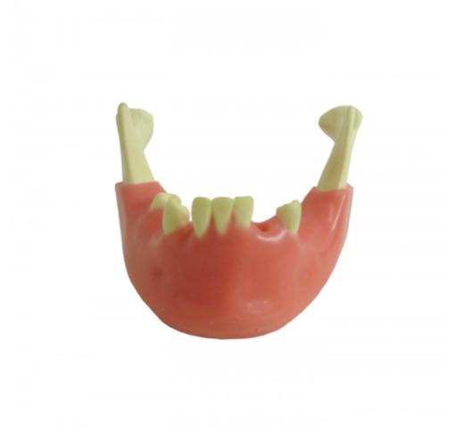 4012 GT - Mandíbula com Alguns Dentes e Gengiva
