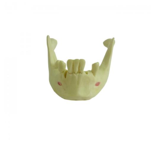 4012 T - Mandíbula com Alguns Dentes