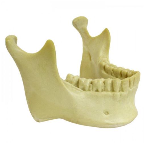 4013-3 - Mandíbula Com Todos Os Dentes Para Crânio 9001