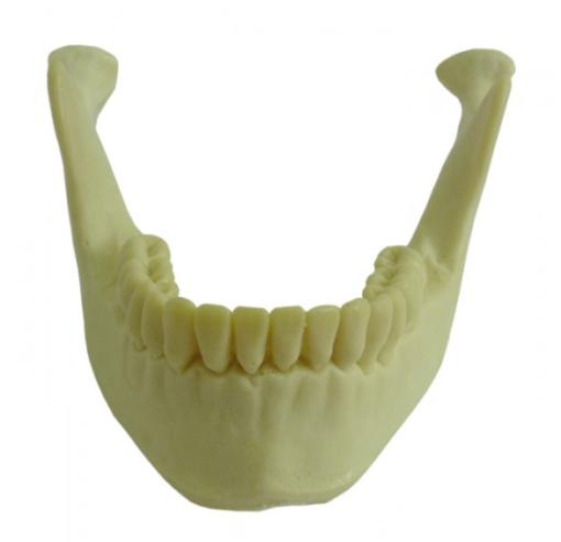 4013 T - Mandíbula com Todos os Dentes