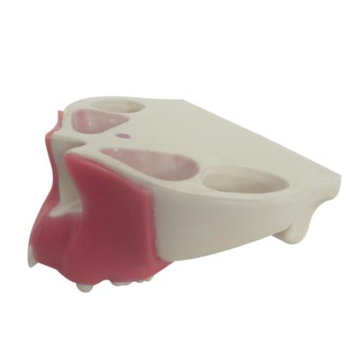 4015 G - Maxilar Com Alguns Dentes + Gengiva