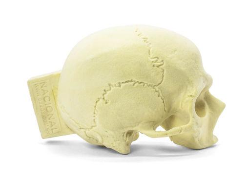 9008 - Crânio com Corte Longitudinal