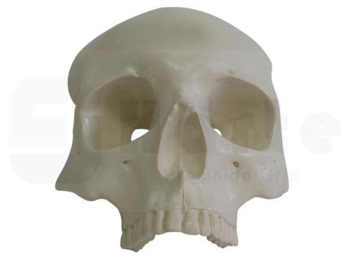 Plano frontal do crânio, com todos os dentes. Ideal para reconstrução com placas e parafusos na região da orbita. Fabricado com propriedades mecânicas semelhantes ao osso humano, possui bloco de apoio para fixação na morsa (cod 5027) durante procedimentos, sendo ideal para uso em aulas práticas e workshop.